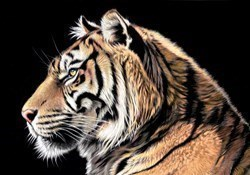 The Wild Side II by Darryn Eggleton - Box Canvas sized 20x14 inches. Available from Whitewall Galleries